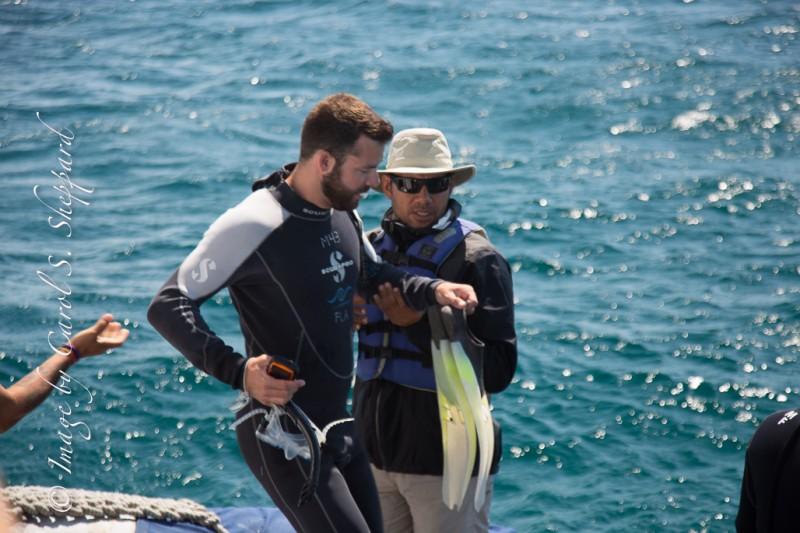 Galapagos Addon-7242