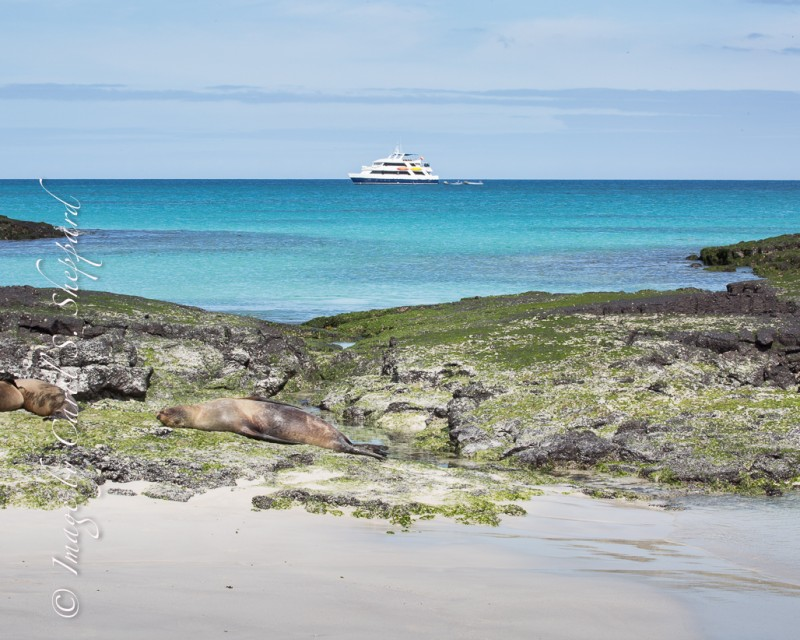 Galapagos Landscape-2918